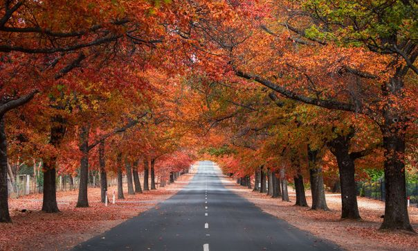 Avenue of Honour, Macedon